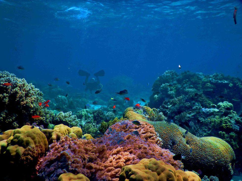 corals oceans